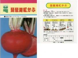 琵琶湖紅かぶ
