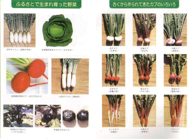 滋賀の野菜&滋賀の各地で作られてきたカブのいろいろ