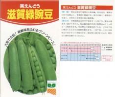 滋賀緑えんどう