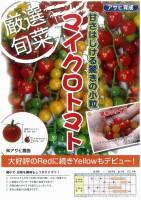 【ミニトマト】マイクロトマト